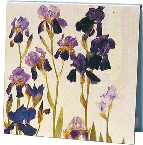 Notecards: Purple Irises and Red and Yellow Tulips