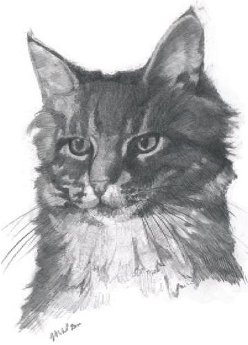 Melvyn Petterson Contemplative Cat SKU: 63WPA/1 contemporary art greetings card