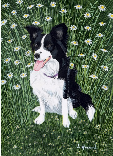 Daisy in the Daisies