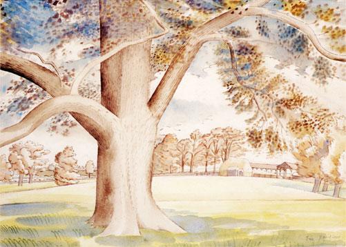 Field Elm, 1932