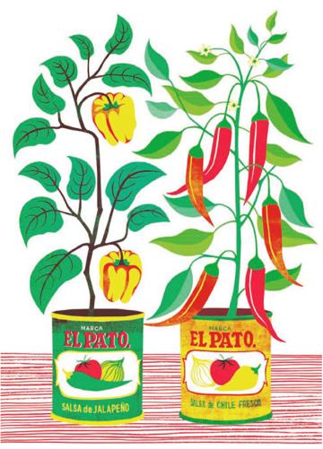 Chilli plants