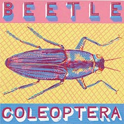 B is for Beetle, close to the ground