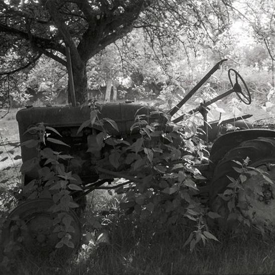 Tractor in Nettles