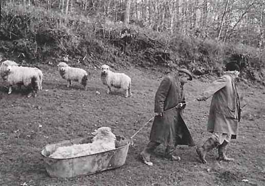 Archie Parkhouse and Ivor Bock moving a Sick Ram