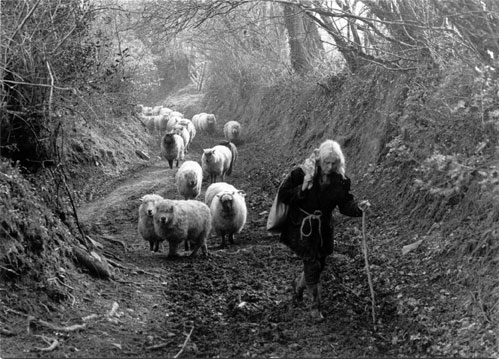 Jo Curzon leading sheep up a lane, Millhams, Dolton, Devon, 1982