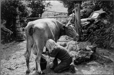 Jo Curzon milking a cow outdoors, Dolton, 1981