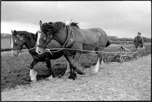 Seymour Husbands ploughing with horses. Sandy Park, Devon