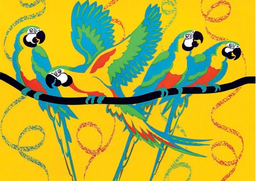 Macaw Carnival!