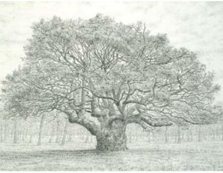 Oak Tree, Spring