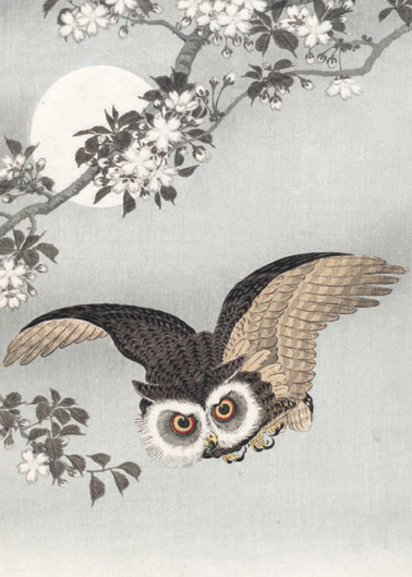 Scops Owl, Cherry Blossoms, and Moon