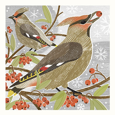 CHRISTMAS CARD  PACK (5) Waxwings